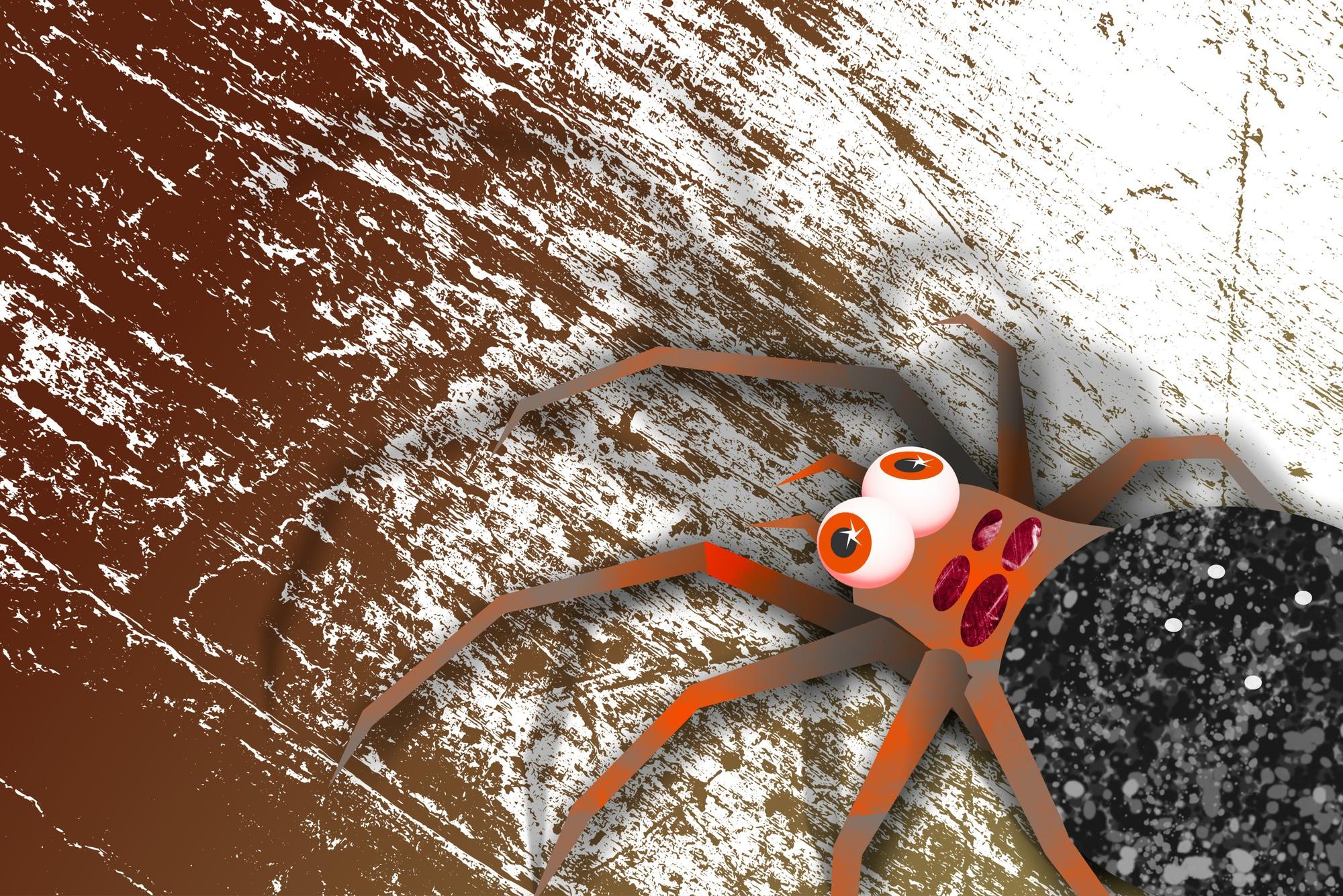 Funny Spider illustration